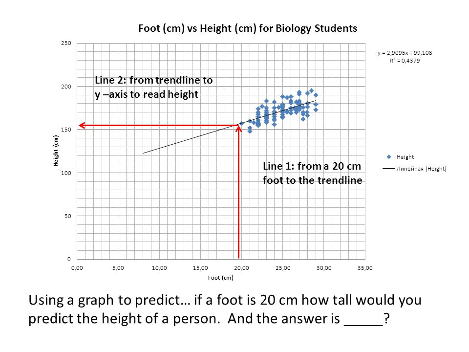 Using a graph to predict… if a foot is 20 cm how tall would you predict the height of a person.