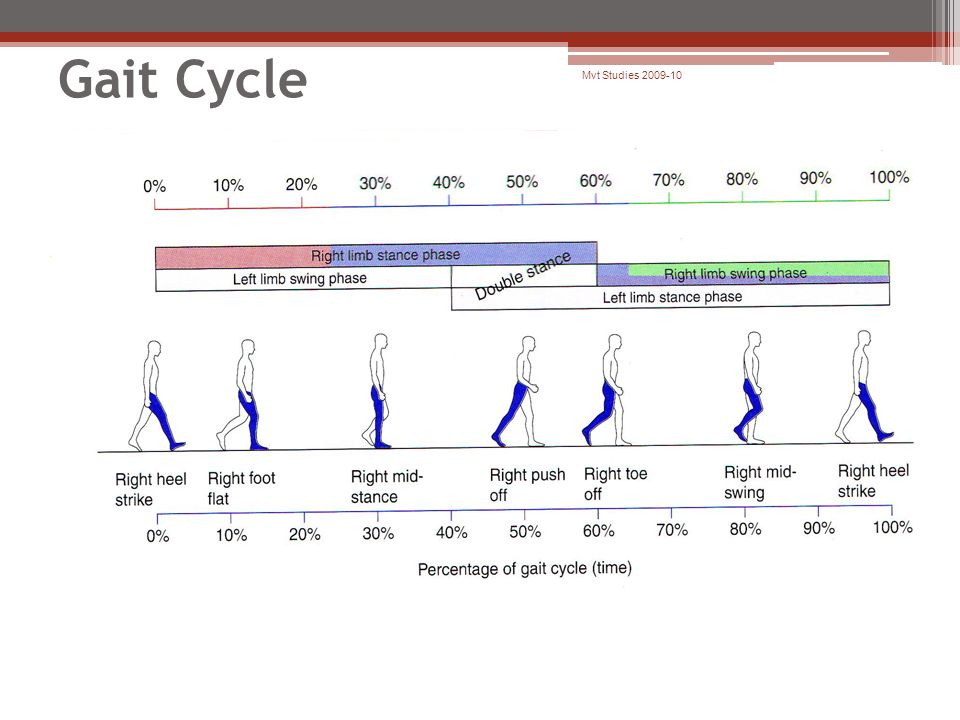 Gait Cycle Mvt Studies 2009-10