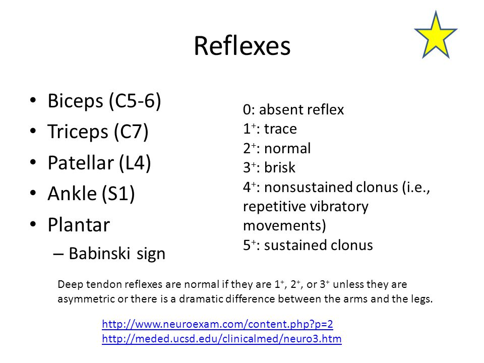 Reflexes Biceps (C5-6) Triceps (C7) Patellar (L4) Ankle (S1) Plantar – Babinski sign 0: absent reflex 1 + : trace 2 + : normal 3 + : brisk 4 + : nonsustained clonus (i.e., repetitive vibratory movements) 5 + : sustained clonus http://www.neuroexam.com/content.php p=2 http://meded.ucsd.edu/clinicalmed/neuro3.htm Deep tendon reflexes are normal if they are 1 +, 2 +, or 3 + unless they are asymmetric or there is a dramatic difference between the arms and the legs.