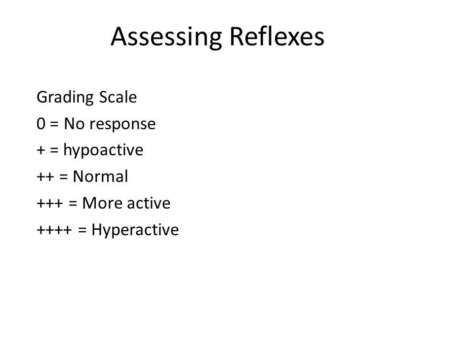 Assessing Reflexes Grading Scale 0 = No response + = hypoactive ++ = Normal +++ = More active ++++ = Hyperactive
