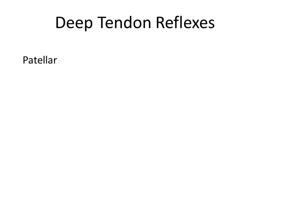 Deep Tendon Reflexes Patellar