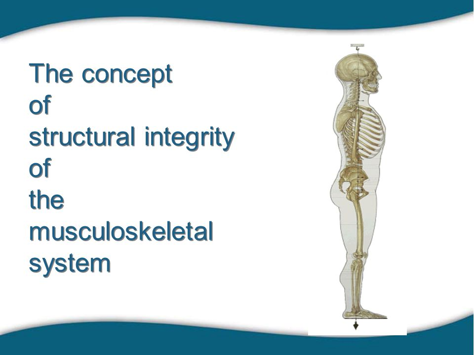 The concept of structural integrity of the musculoskeletal system