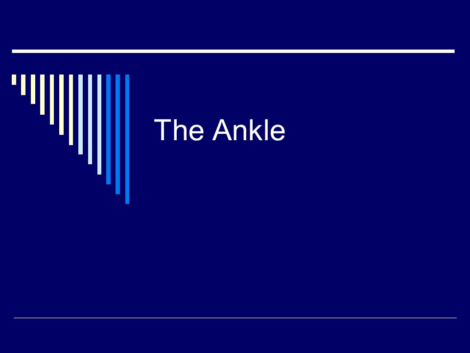 ANATOMY OF THE ANKLE