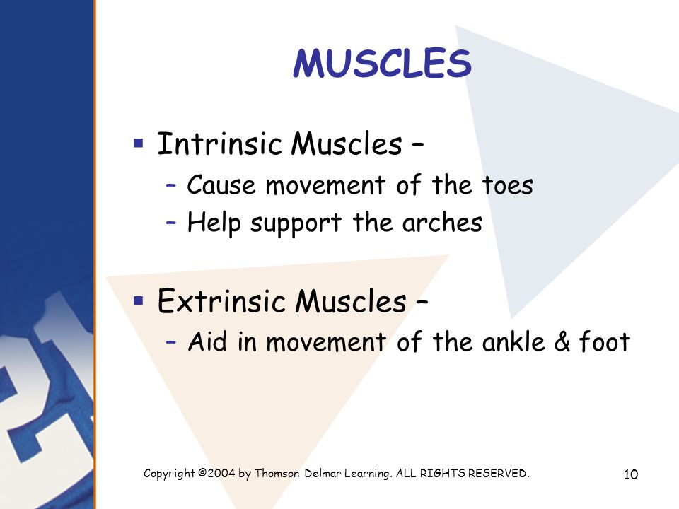 Copyright ©2004 by Thomson Delmar Learning. ALL RIGHTS RESERVED. 10 MUSCLES  Intrinsic Muscles – –Cause movement of the toes –Help support the arches