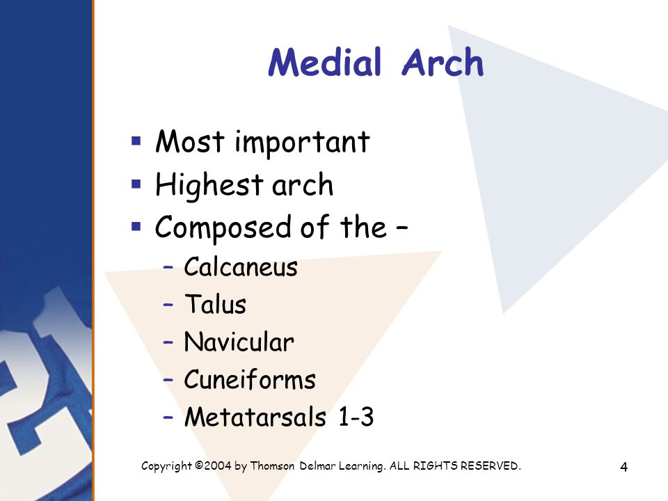 Copyright ©2004 by Thomson Delmar Learning. ALL RIGHTS RESERVED. 4 Medial Arch  Most important  Highest arch  Composed of the – –Calcaneus –Talus –