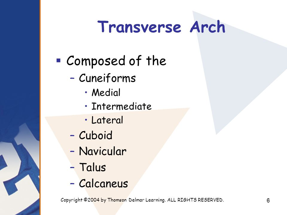 Copyright ©2004 by Thomson Delmar Learning. ALL RIGHTS RESERVED. 6 Transverse Arch  Composed of the –Cuneiforms Medial Intermediate Lateral –Cuboid –