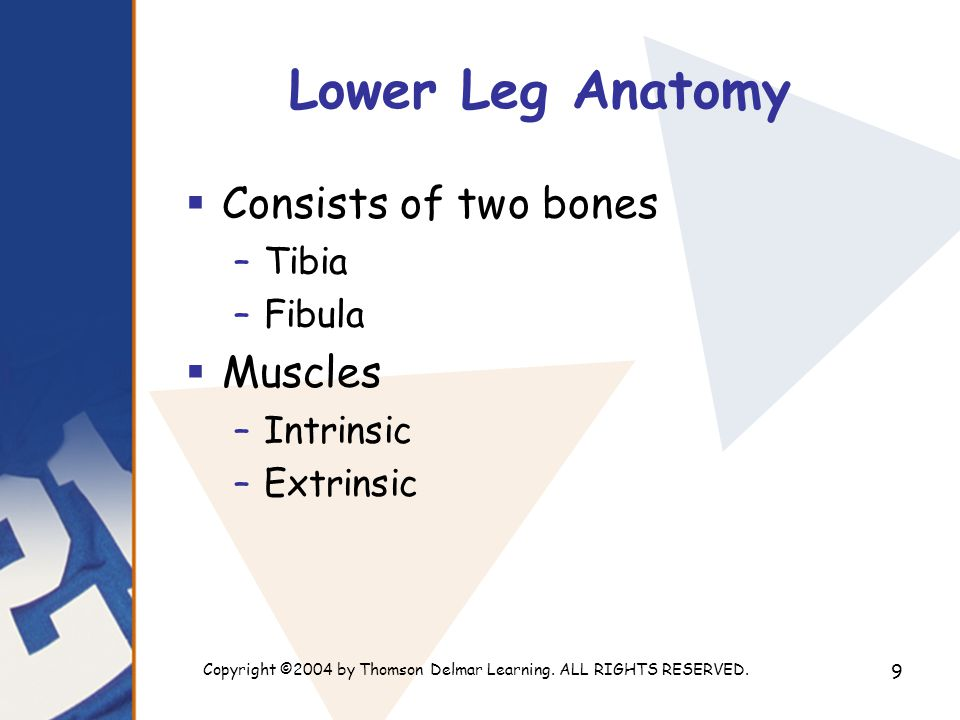 Copyright ©2004 by Thomson Delmar Learning. ALL RIGHTS RESERVED. 9 Lower Leg Anatomy  Consists of two bones –Tibia –Fibula  Muscles –Intrinsic –Extr