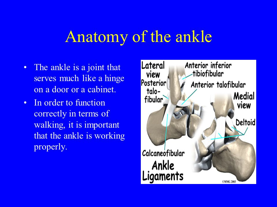 anterior talofibular ligament is the ligament that has the greatest impact on the lateral part of the ankle.