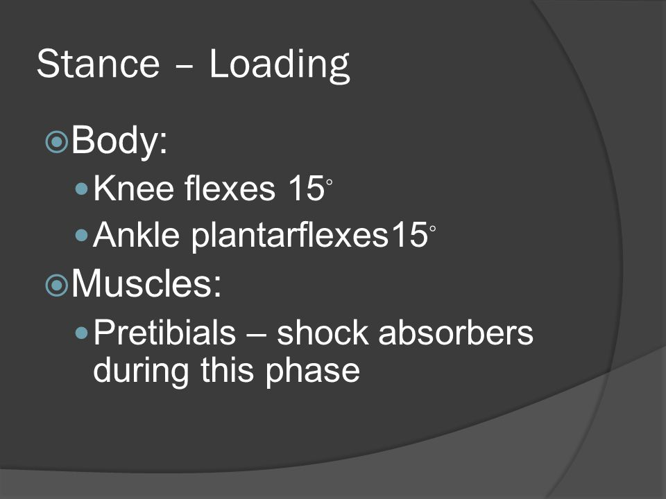 Stance – Loading  Body: Knee flexes 15 ◦ Ankle plantarflexes15 ◦  Muscles: Pretibials – shock absorbers during this phase