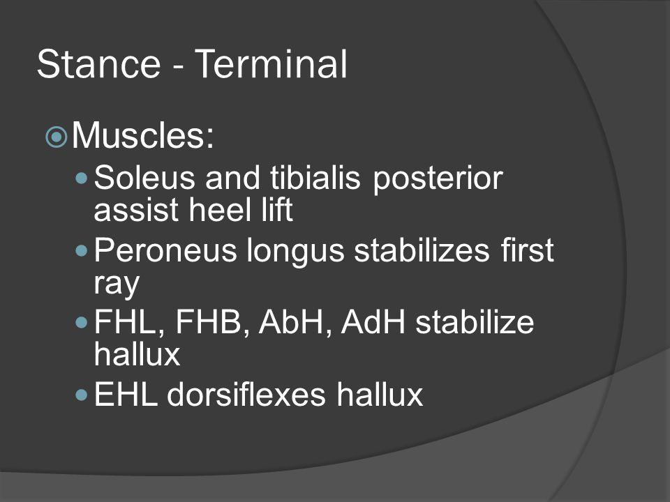 Stance - Terminal  Muscles: Soleus and tibialis posterior assist heel lift Peroneus longus stabilizes first ray FHL, FHB, AbH, AdH stabilize hallux EHL dorsiflexes hallux