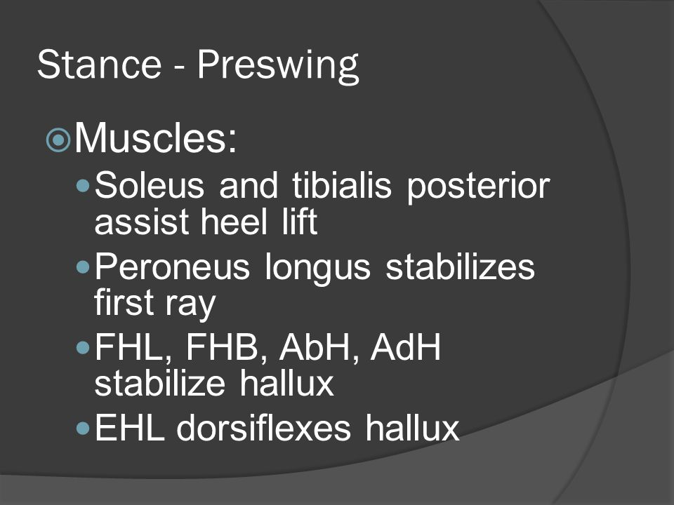 Stance - Preswing  Muscles: Soleus and tibialis posterior assist heel lift Peroneus longus stabilizes first ray FHL, FHB, AbH, AdH stabilize hallux EHL dorsiflexes hallux