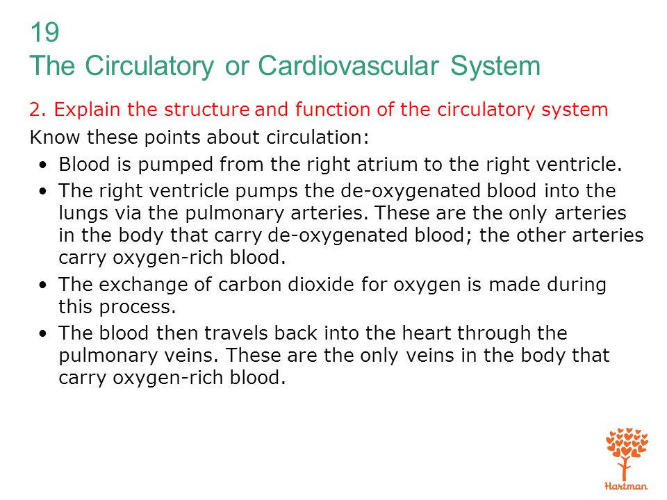 19 The Circulatory or Cardiovascular System 2. Explain the structure and function of the circulatory system Know these points about circulation: Blood