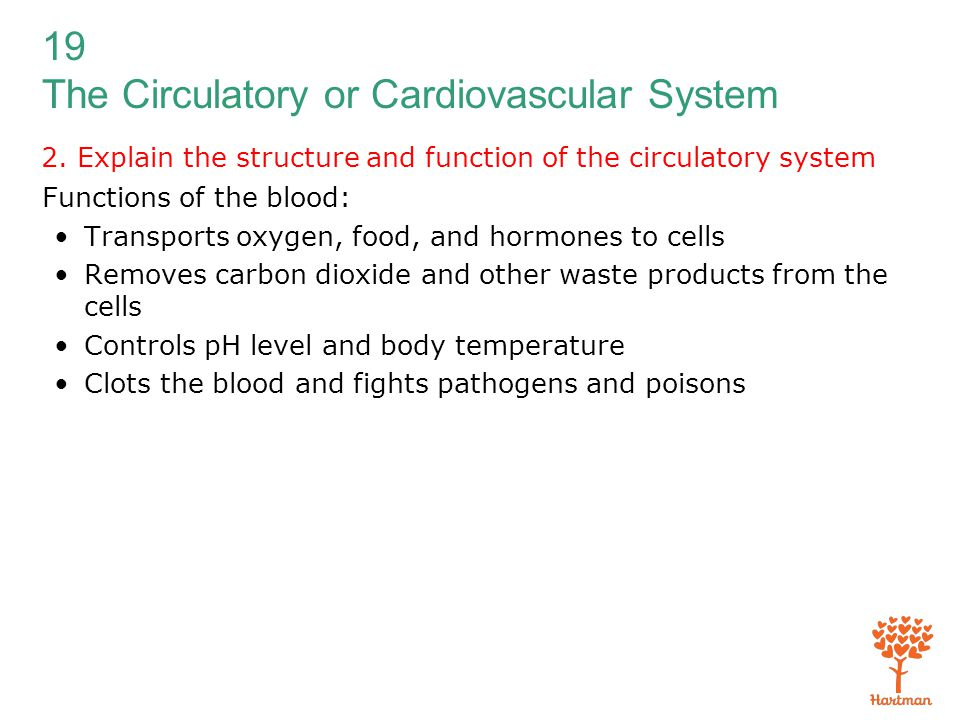 19 The Circulatory or Cardiovascular System 2. Explain the structure and function of the circulatory system Functions of the blood: Transports oxygen,