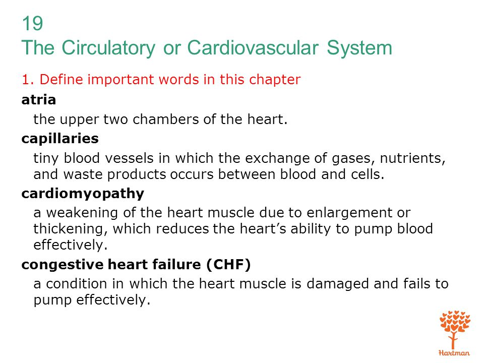 19 The Circulatory or Cardiovascular System 1. Define important words in this chapter atria the upper two chambers of the heart. capillaries tiny bloo