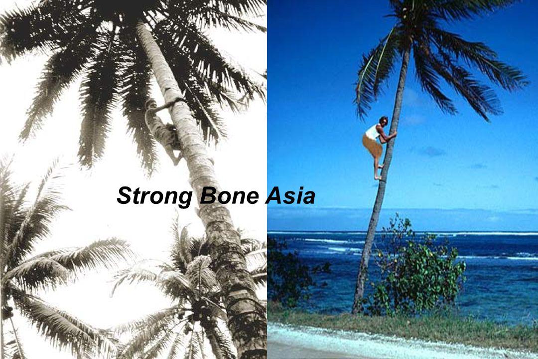 Strong Bone Asia