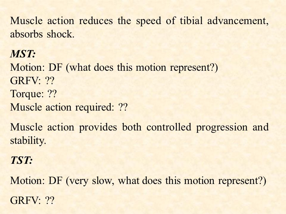 Muscle action reduces the speed of tibial advancement, absorbs shock.