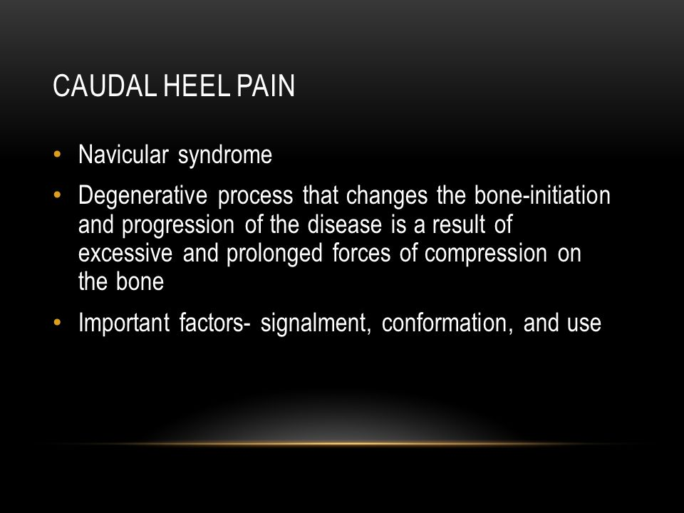 CAUDAL HEEL PAIN Navicular syndrome Degenerative process that changes the bone-initiation and progression of the disease is a result of excessive and prolonged forces of compression on the bone Important factors- signalment, conformation, and use