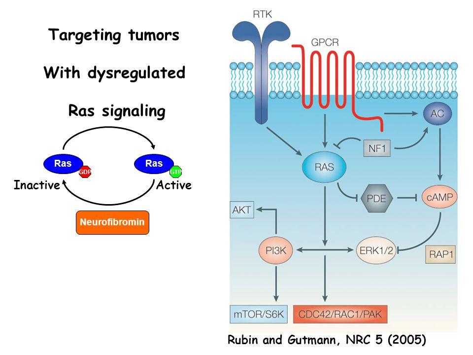 Rubin and Gutmann, NRC 5 (2005) Ras GTPGDP ActiveInactive Neurofibromin Targeting tumors With dysregulated Ras signaling