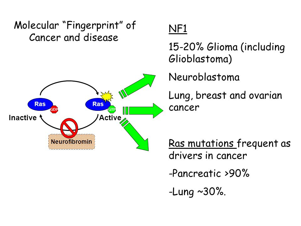 Ras GTPGDP ActiveInactive Neurofibromin NF1 15-20% Glioma (including Glioblastoma) Neuroblastoma Lung, breast and ovarian cancer Ras mutations frequent as drivers in cancer -Pancreatic >90% -Lung ~30%.