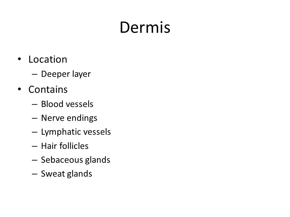Dermis Location – Deeper layer Contains – Blood vessels – Nerve endings – Lymphatic vessels – Hair follicles – Sebaceous glands – Sweat glands