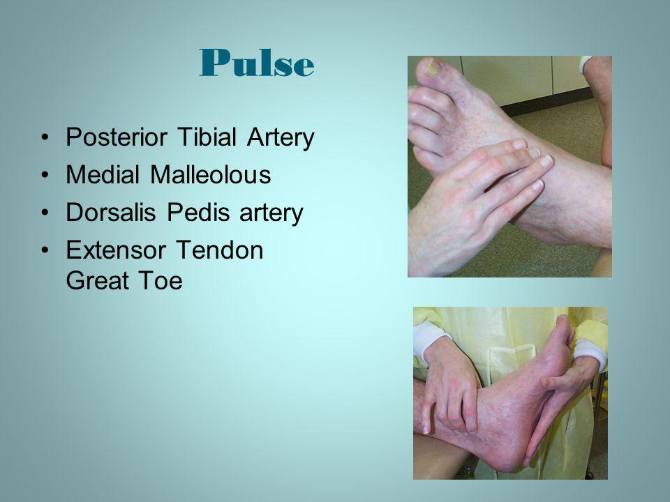 Pulse Posterior Tibial Artery Medial Malleolous Dorsalis Pedis artery Extensor Tendon Great Toe