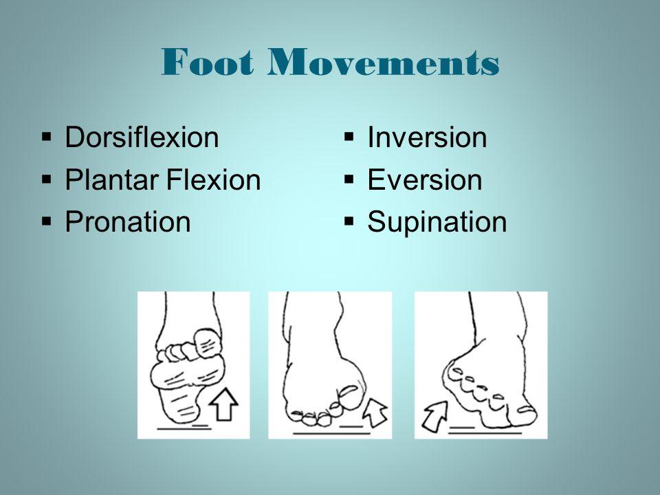 Foot Movements  Dorsiflexion  Plantar Flexion  Pronation  Inversion  Eversion  Supination