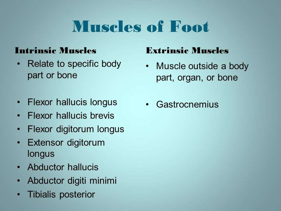 Muscles of Foot Intrinsic Muscles Relate to specific body part or bone Flexor hallucis longus Flexor hallucis brevis Flexor digitorum longus Extensor