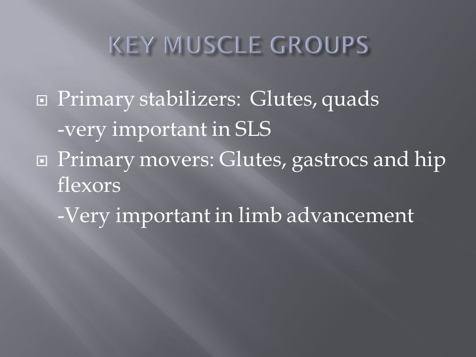  Primary stabilizers: Glutes, quads -very important in SLS  Primary movers: Glutes, gastrocs and hip flexors -Very important in limb advancement