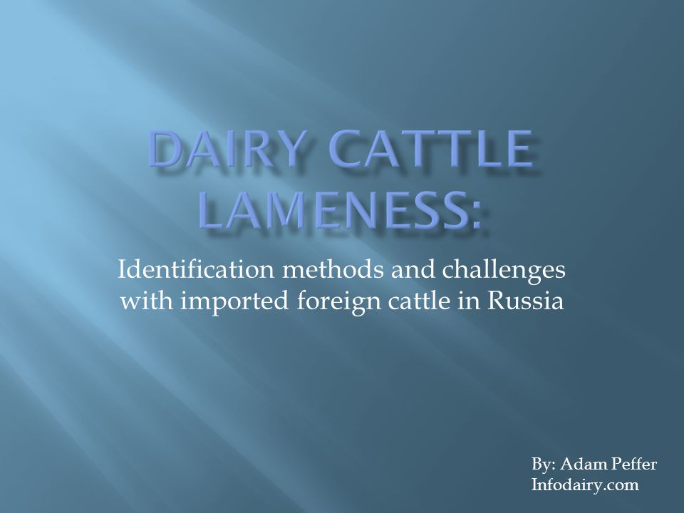 Identification methods and challenges with imported foreign cattle in Russia By: Adam Peffer Infodairy.com