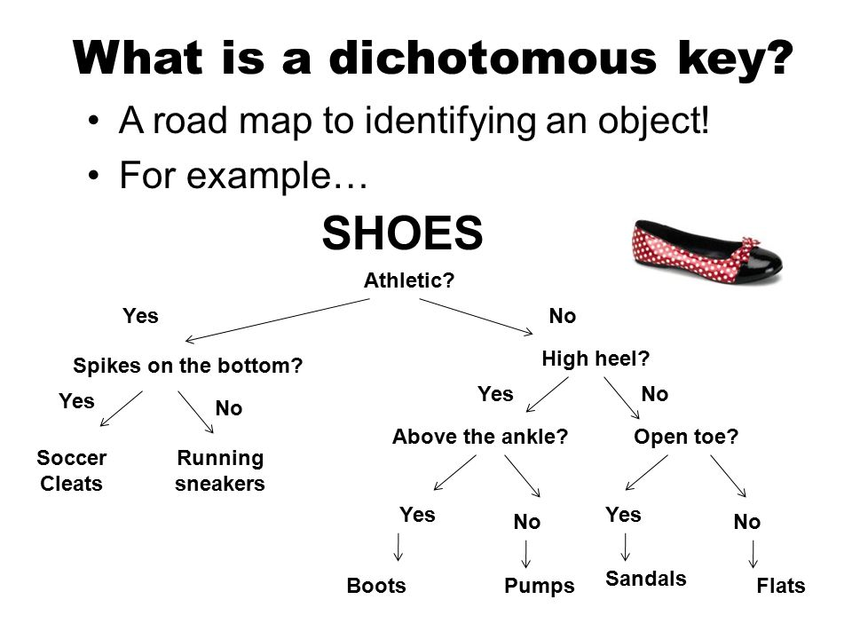 What is a dichotomous key. A road map to identifying an object.