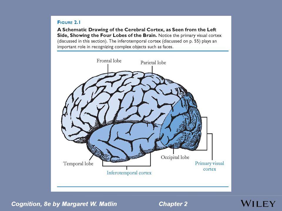 Cognition, 8e by Margaret W. MatlinChapter 2