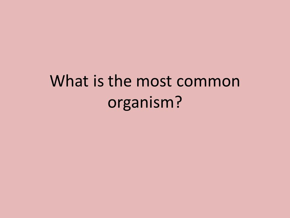 What is the most common organism?