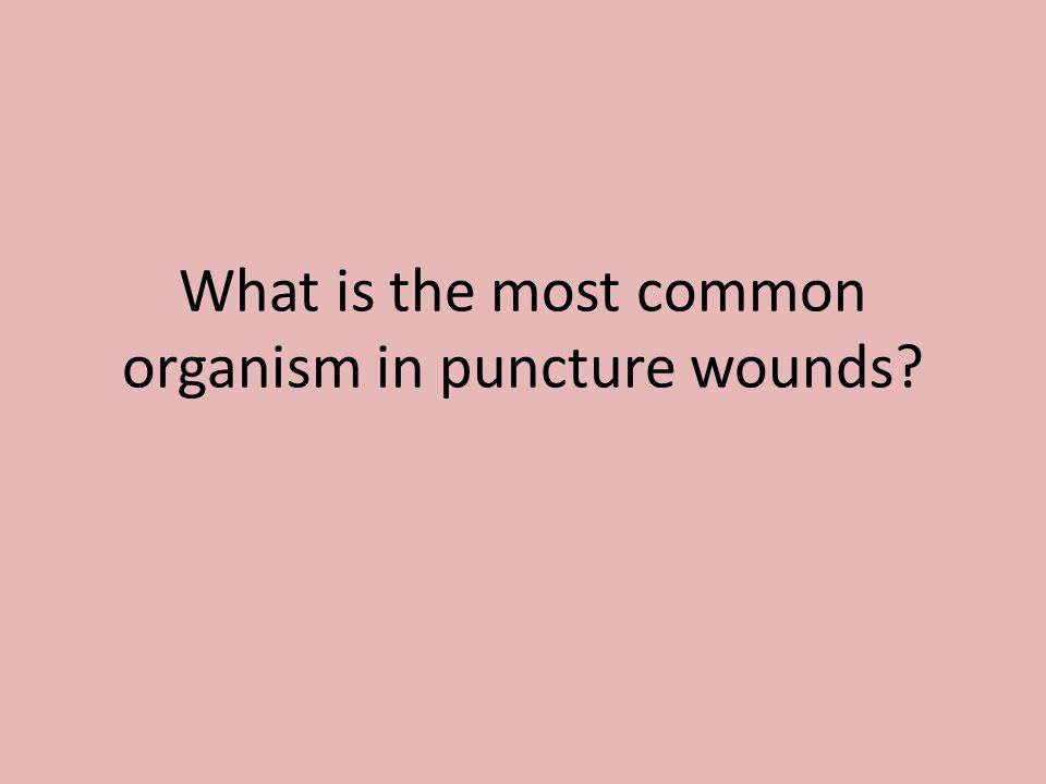What is the most common organism in puncture wounds?