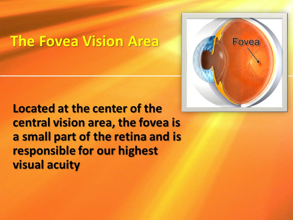 Located at the center of the central vision area, the fovea is a small part of the retina and is responsible for our highest visual acuity The Fovea V