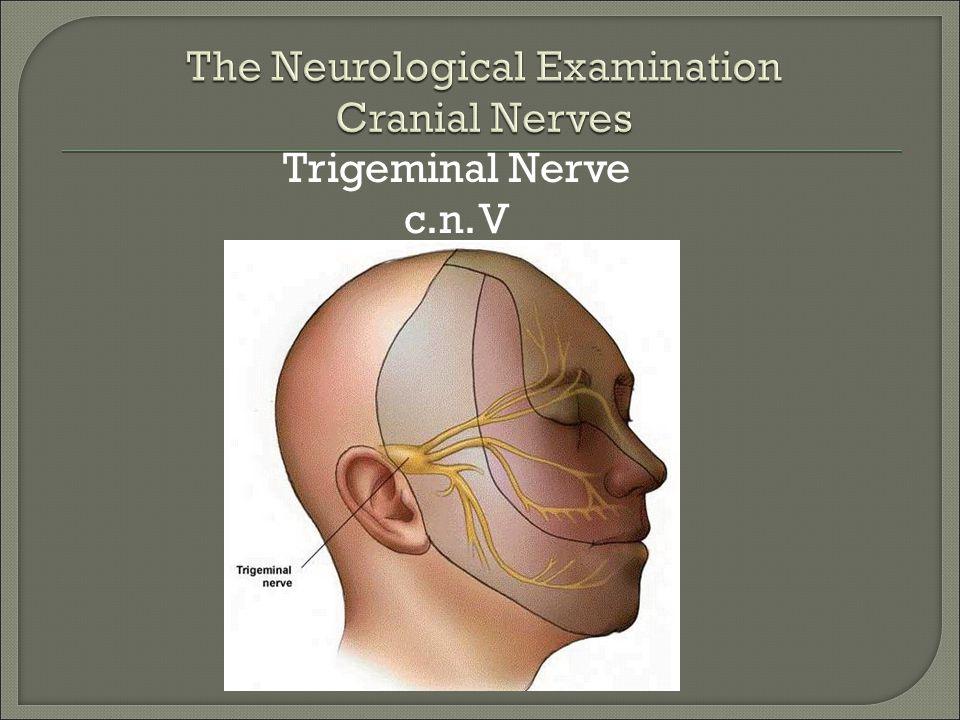 Trigeminal Nerve c.n. V