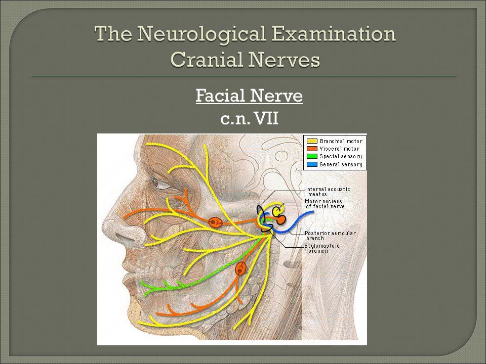 Facial Nerve c.n. VII