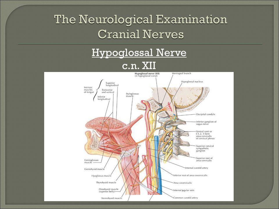 Hypoglossal Nerve c.n. XII