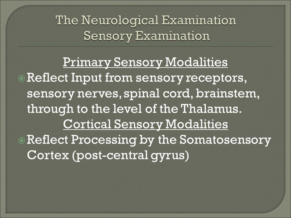 Primary Sensory Modalities  Reflect Input from sensory receptors, sensory nerves, spinal cord, brainstem, through to the level of the Thalamus. Corti