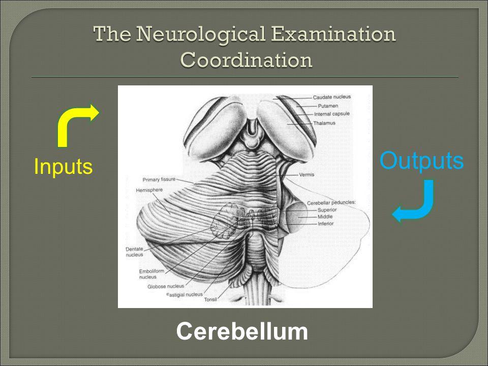 Cerebellum Inputs Outputs