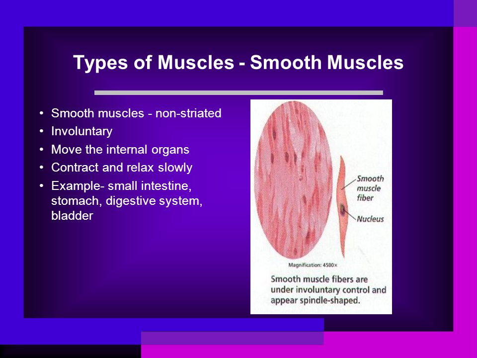 Types of Muscles - Smooth Muscles Smooth muscles - non-striated Involuntary Move the internal organs Contract and relax slowly Example- small intestin