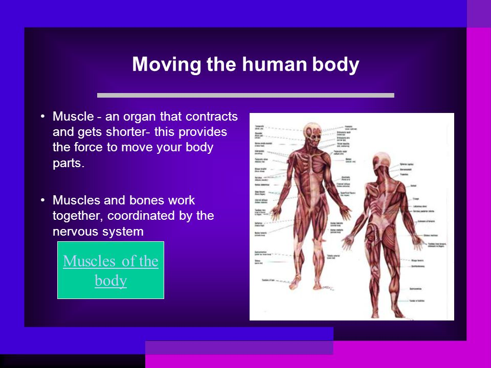 Muscles and Bones Work Together Bones and muscles: the skeletal and muscular system United streaming 2 minBones and muscles: the skeletal and muscular system United streaming 2 min Brainpop A review