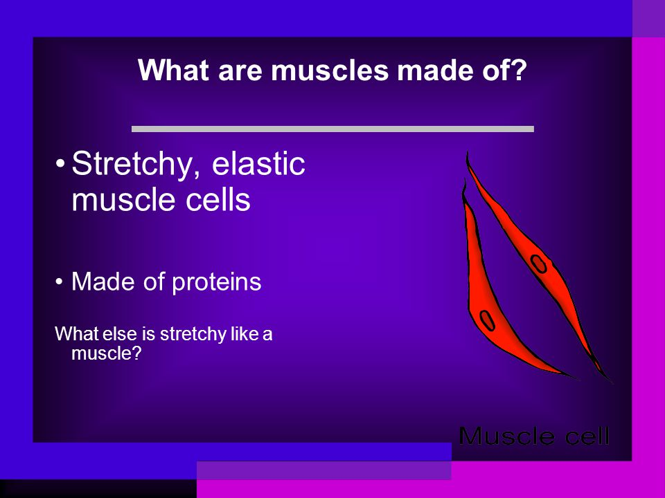 What are muscles made of? Stretchy, elastic muscle cells Made of proteins What else is stretchy like a muscle?
