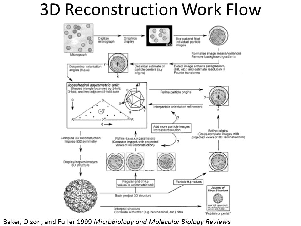 3D Reconstruction Work Flow Baker, Olson, and Fuller 1999 Microbiology and Molecular Biology Reviews