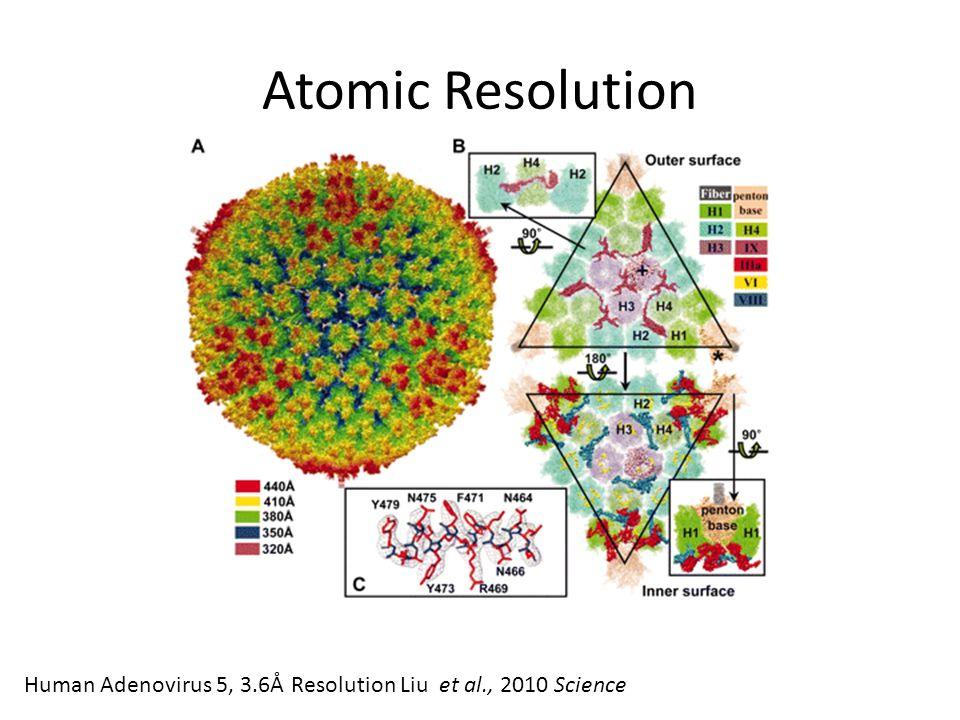 Atomic Resolution Human Adenovirus 5, 3.6Å Resolution Liu et al., 2010 Science