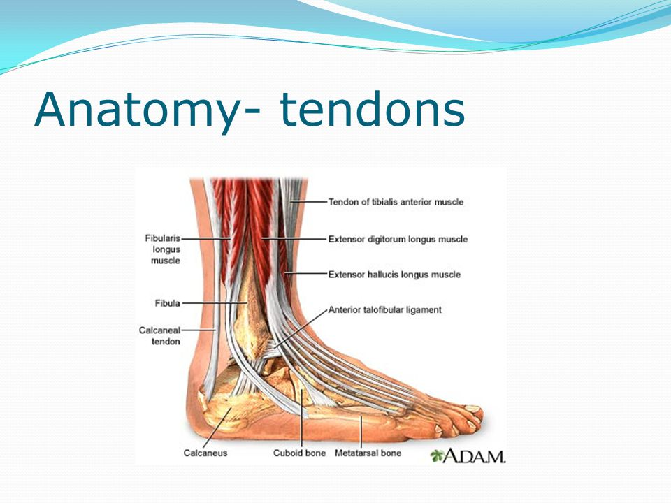 Ligament tests ATFL- Anterior drawer test at 20° plantarflexion Calcaneofibular ligament- talar tilt at 90° into adduction Deltoid ligament- talar tilt at 90° into abduction Squeeze test- syndesmosis injury Thompson's Test- Achilles