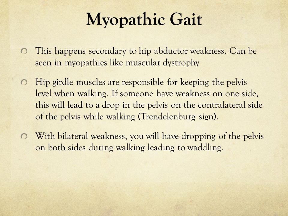 Myopathic Gait This happens secondary to hip abductor weakness. Can be seen in myopathies like muscular dystrophy Hip girdle muscles are responsible f