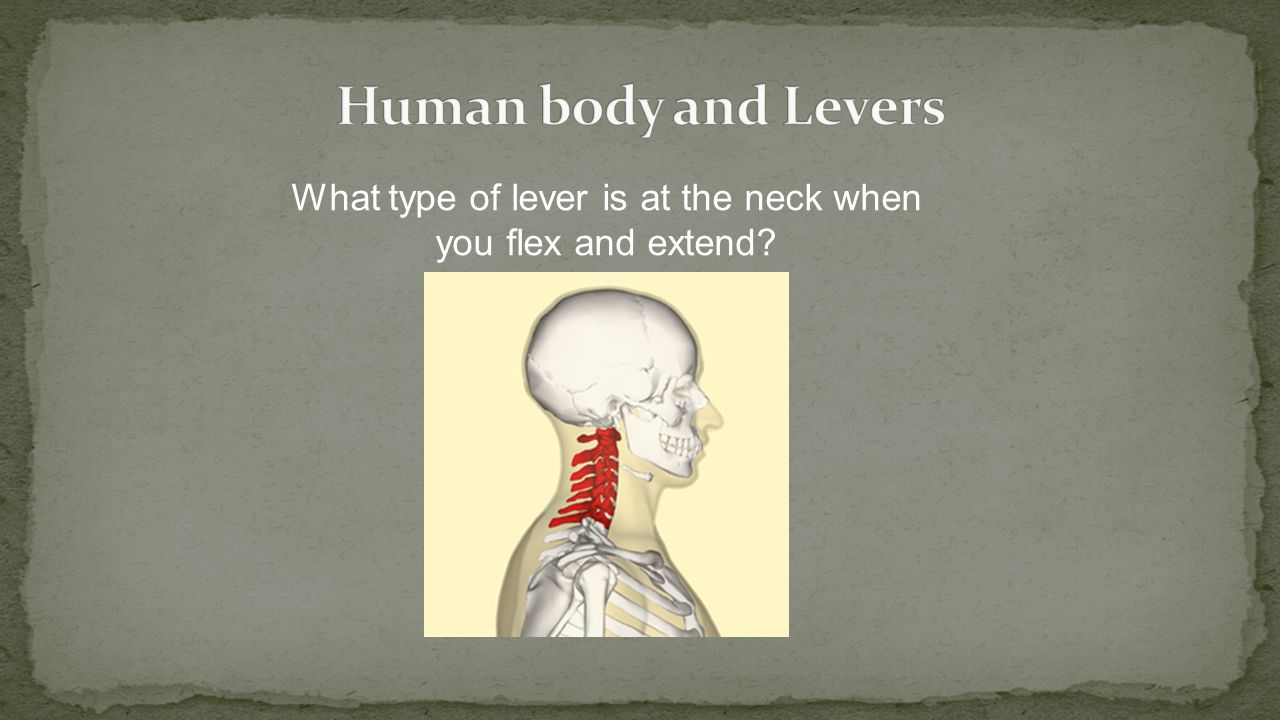 What type of lever is at the neck when you flex and extend?