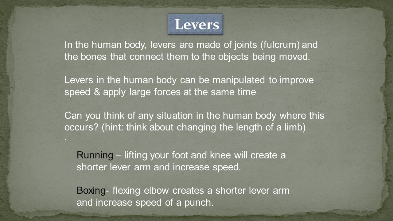 In the human body, levers are made of joints (fulcrum) and the bones that connect them to the objects being moved.