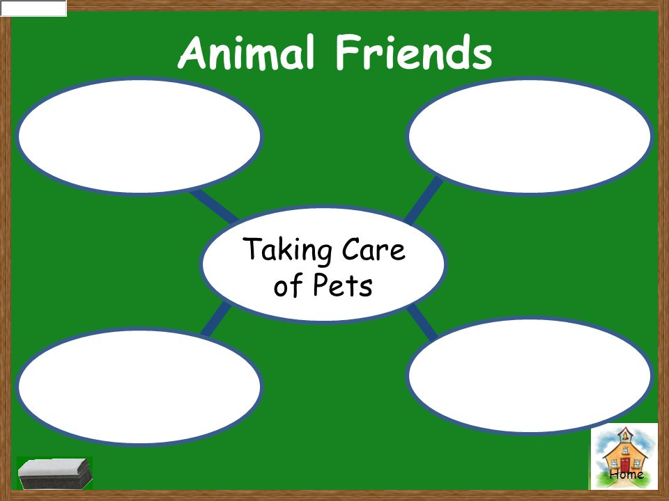 Home Animal Friends Taking Care of Pets