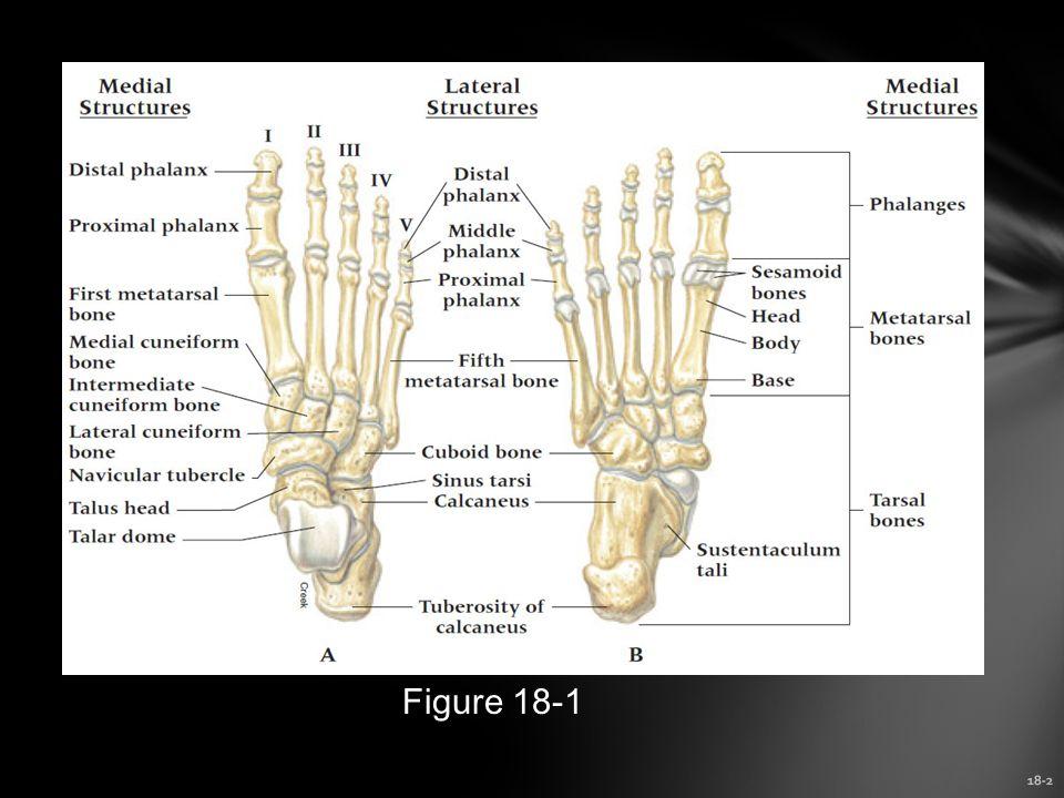 18-2 Figure 18-1
